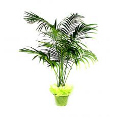 관엽식물-켄쟈야자-22