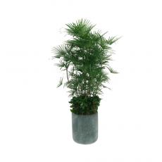관엽식물-종려죽-81