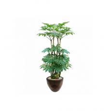 관엽식물-팔손이-87