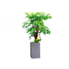 관엽식물-해피트리-90